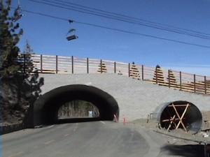 bridge-11-24.jpg