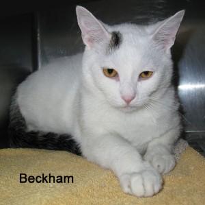 cat-beckham