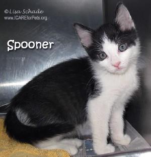 cat-spooner