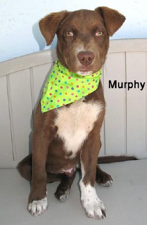 dog-murphy