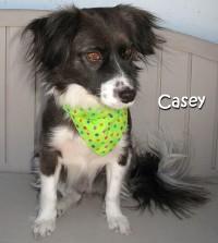 dog-casey
