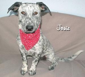 dog_josie