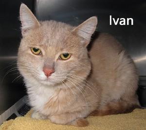 cat_ivan