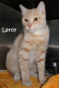 cat_leroy