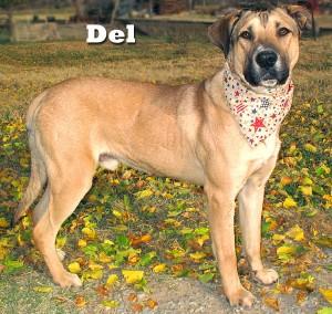 dog_del