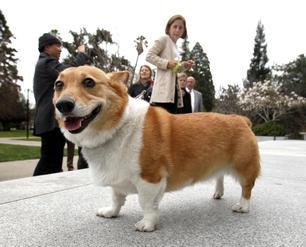 sutterdog
