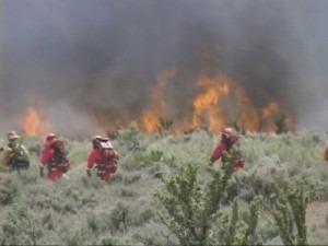Buttermilk Brush Fire