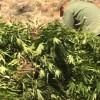 pot_farm