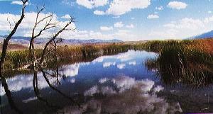 McNally Ponds