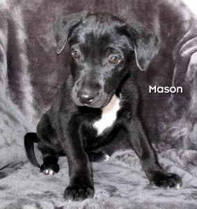 13-02-08 Mazourka Canyon Pup E 1 ID13-02-007 MASON - Stray 2-6 Mazourka Canyon Rd FACEBOOK