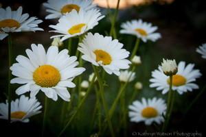 Pretty flowers at Horshoelake.  Photo by Kathryn Watson