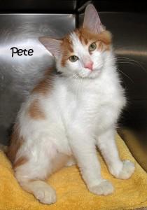 13-10-04 PETE Orange & White kitten ID13-05-027 - FACEBOOK