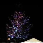 Mammoth-tree-lighting