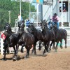 Photo courtesy Nicole Njos and Percheron Thunder