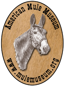 american mule museum