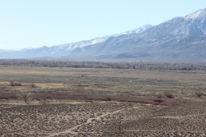 A section of the 300-acre Five Bridges mitigation area, south of the Owens River identified by the tree line