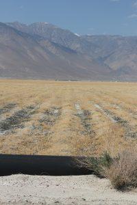 A salt grass field