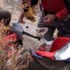 Rescued Husky-German Shepherd at bottom of Owens Valley River Gorge